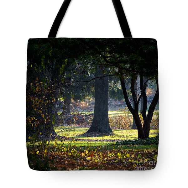 Intrigued By The Light Tote Bag