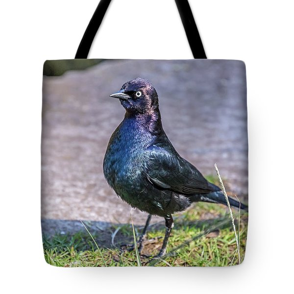 Tote Bag featuring the photograph Iridescent Brewer by Kate Brown
