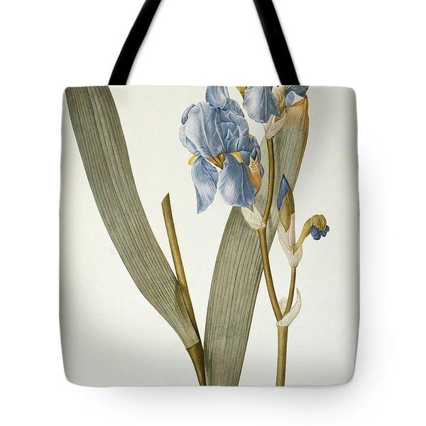Iris Pallida Tote Bag