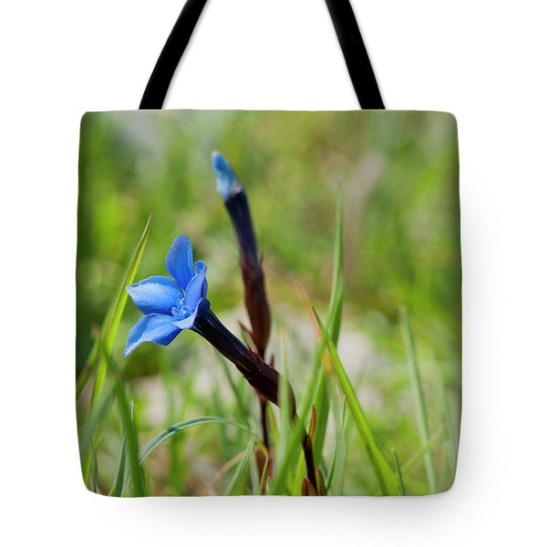 Tote Bag featuring the photograph Irish Gentians by Rob Hemphill