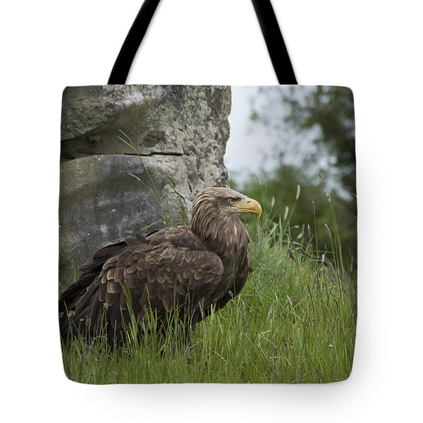 Irish Sea Eagle Tote Bag by Martina Fagan