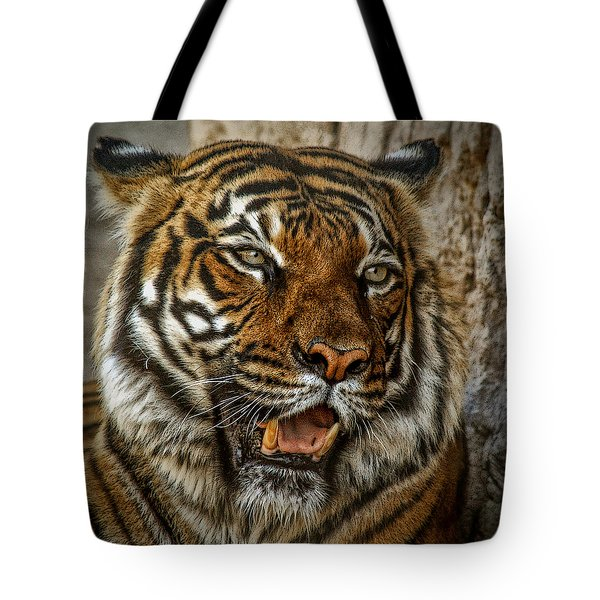 Tote Bag featuring the photograph Is This My Best Side by Elaine Malott