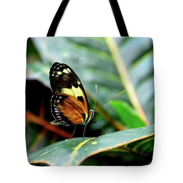 Ismenius Tiger Butterfly-2 Tote Bag