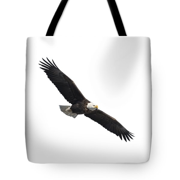 Isolated American Bald Eagle 2016-2 Tote Bag