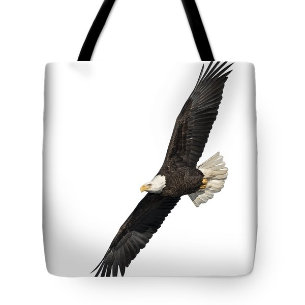 Isolated American Bald Eagle 2016-3 Tote Bag
