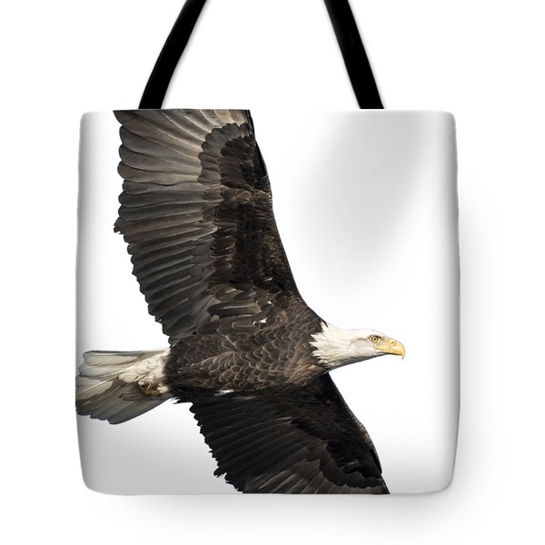 Isolated American Bald Eagle 2016-4 Tote Bag