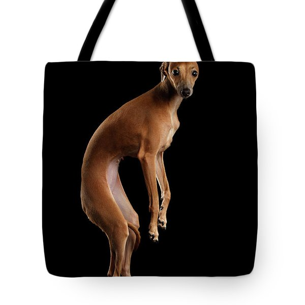 Italian Greyhound Dog Jumping, Hangs In Air, Looking Camera Isolated Tote Bag