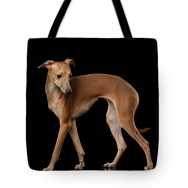 Italian Greyhound Dog Standing  Isolated Tote Bag