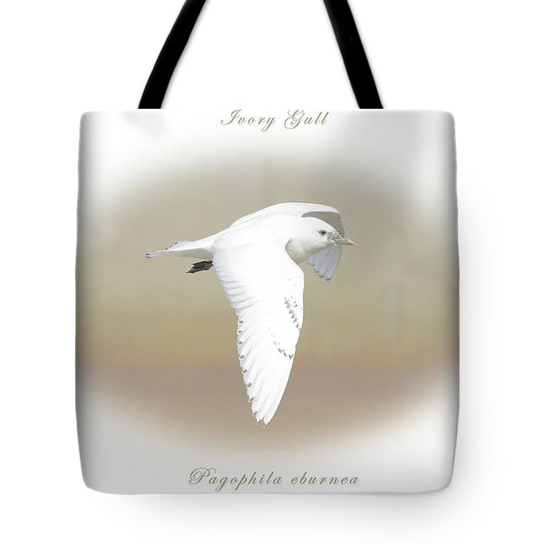 Ivory Gull Tote Bag