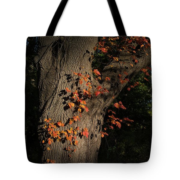 Ivy In The Fall Tote Bag