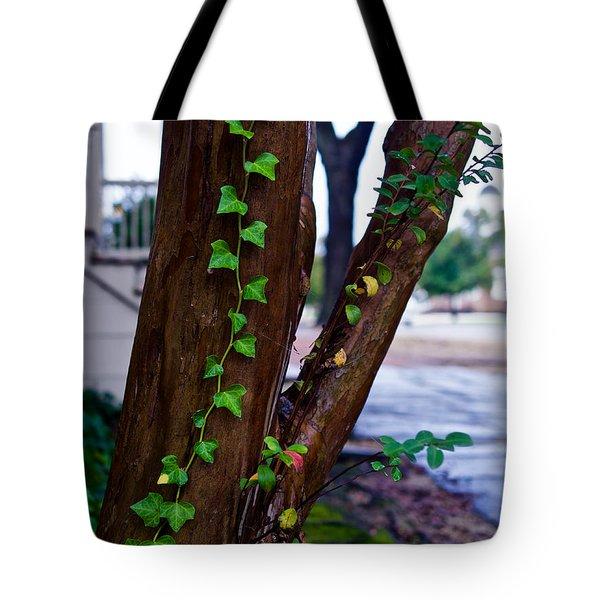 Ivy In Williamsburg Tote Bag