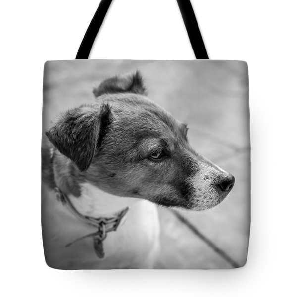 Tote Bag featuring the photograph Jack Russell by Nick Bywater