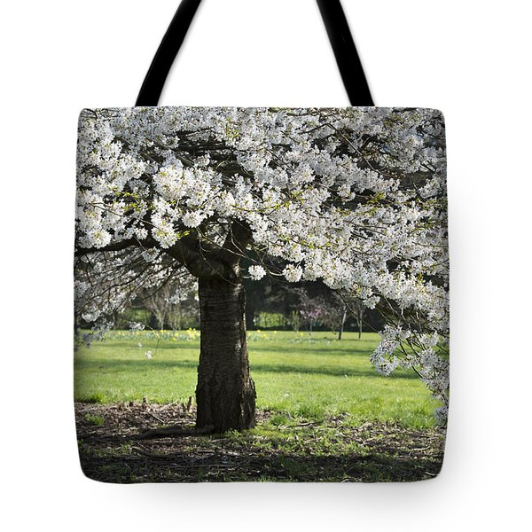Japanese Cherry Tree Tote Bag