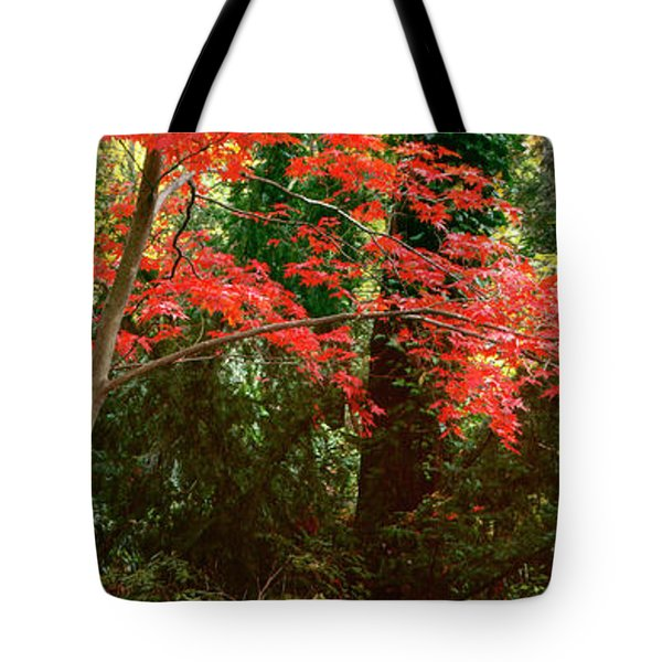 Japanese Maple Tote Bag by John Pagliuca