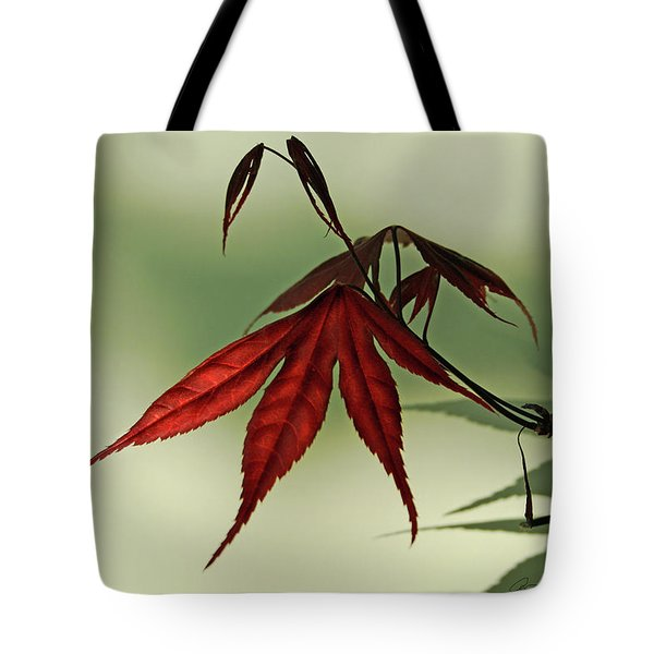 Tote Bag featuring the photograph Japanese Maple Leaf by Ann Lauwers