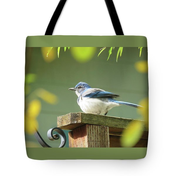 Scrub Jay On A Fence - Images From The Fall Garden Tote Bag by Brooks Garten Hauschild