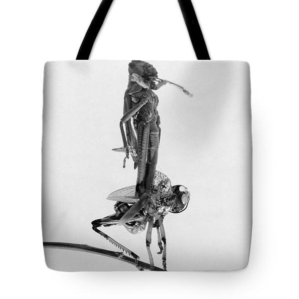 Jerusalem: Locusts, 1915 Tote Bag by Granger