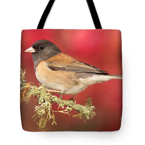 Junco Against Peach Blossoms Tote Bag