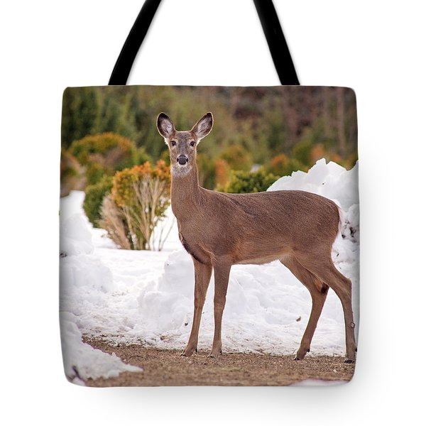 Tote Bag featuring the photograph Junior by Angel Cher