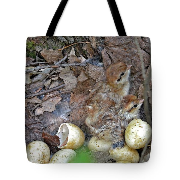 Just Hatched Ruffed Grouse Chicks Tote Bag