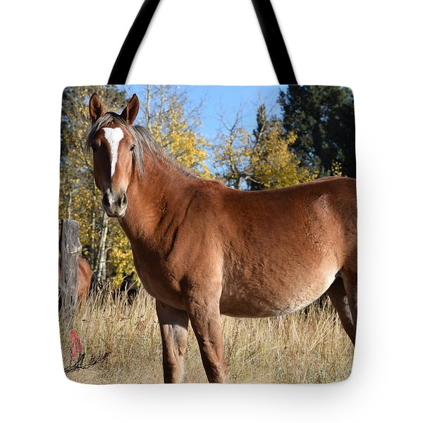 Tote Bag featuring the photograph Horse Cr 511 Divide Co by Margarethe Binkley