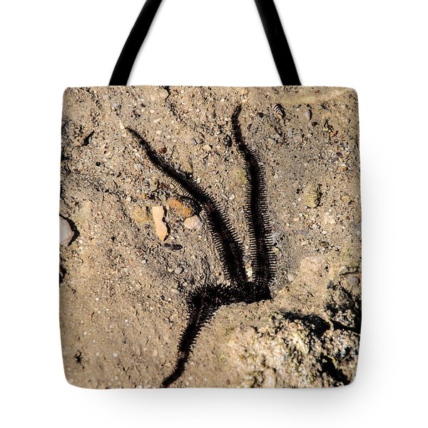 Tote Bag featuring the photograph Just The Two For You by Jez C Self