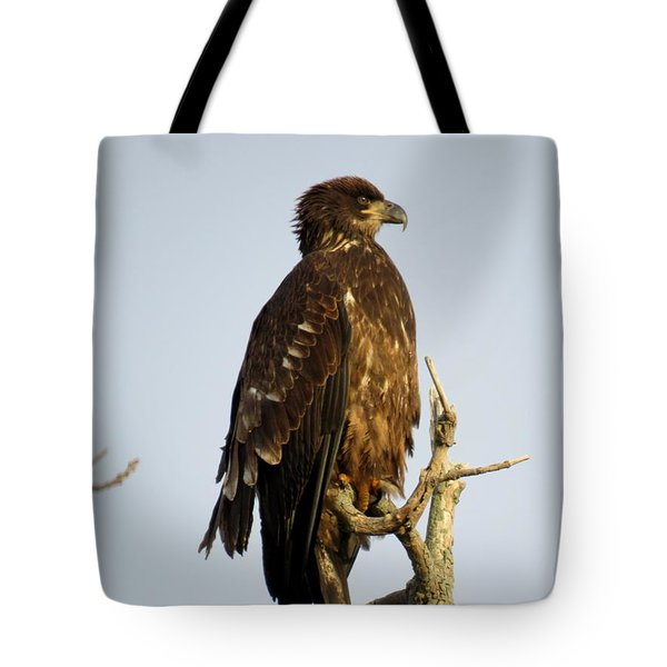Juvenile Bald Eagle 1 Tote Bag