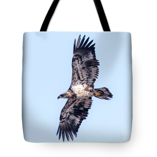 Tote Bag featuring the photograph Juvenile Bald Eagle 2017 by Ricky L Jones