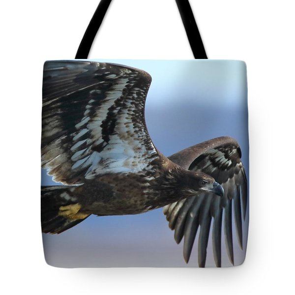 Tote Bag featuring the photograph Juvenile Bald Eagle by Coby Cooper