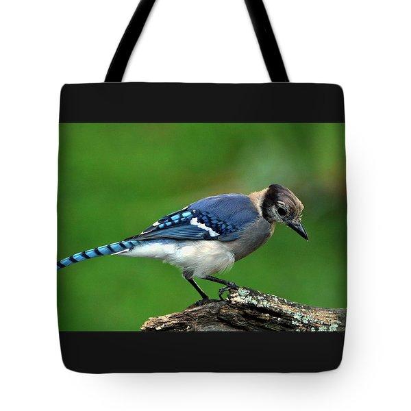 Juvenile Blue Jay  Tote Bag
