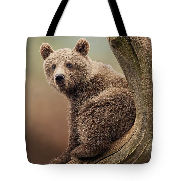 Juvenile Brown Bear - 365-5 Tote Bag