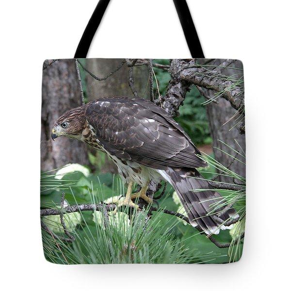 Juvenile Cooper's Hawk Tote Bag