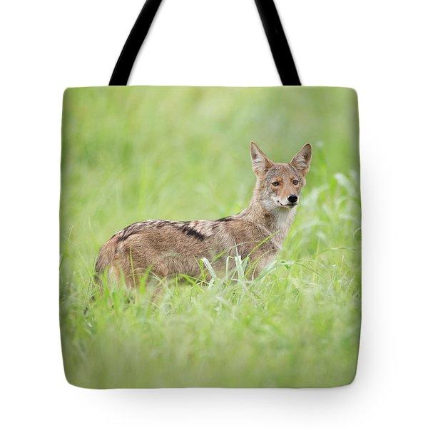 Juvenile Coyote Tote Bag