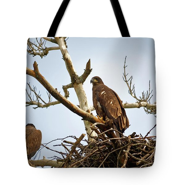 Juvenile Eagles Tote Bag