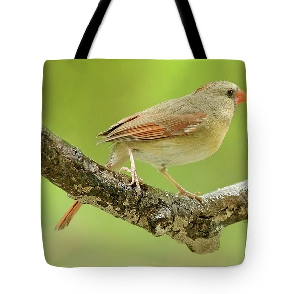 Juvenile, Female Cardinal, Animal Portrait Tote Bag