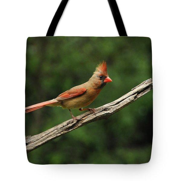 Juvenile Female Cardinal Tote Bag