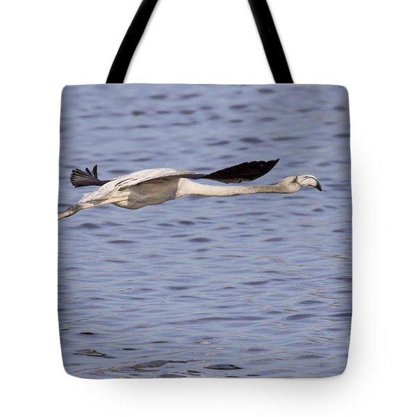 Juvenile Flamingo Taking Off Tote Bag
