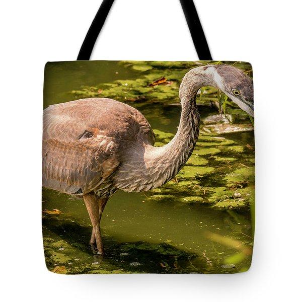 Juvenile Great Blue Heron Tote Bag