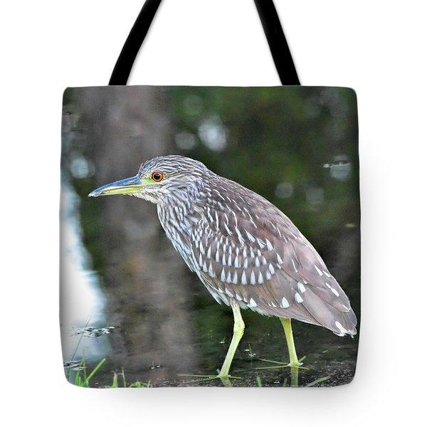 Juvenile Night Heron Tote Bag