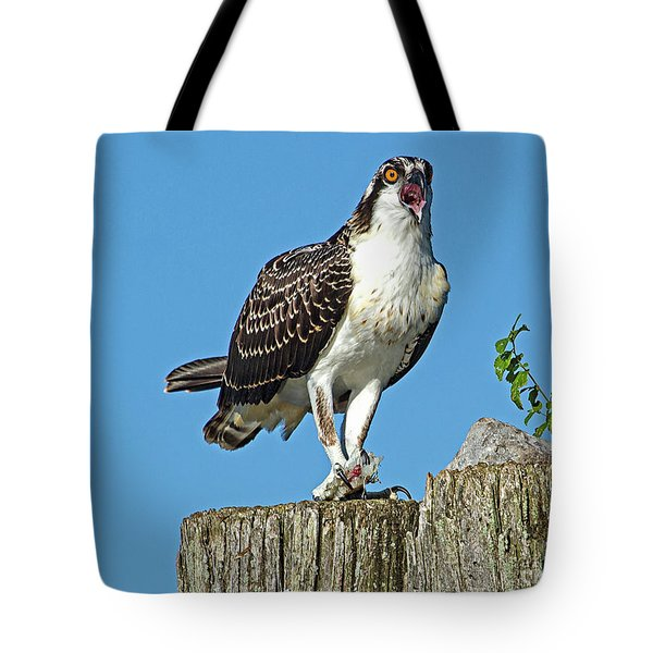 Juvenile Osprey#1 Tote Bag