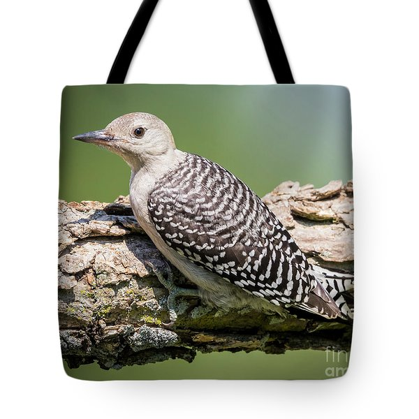 Juvenile Red-bellied Woodpecker Tote Bag