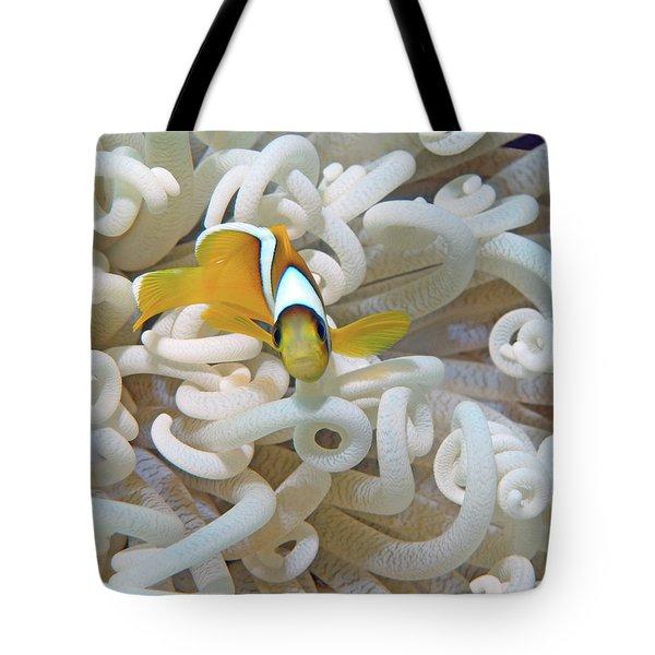 Juvenile Red Sea Clownfish, Eilat, Israel 3 Tote Bag