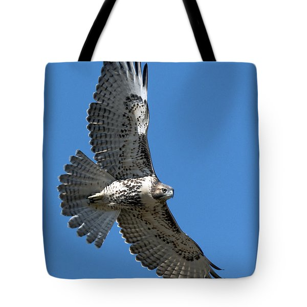 Juvenile Red-tailed Hawk At Riverside Cemetery Tote Bag by Stephen  Johnson