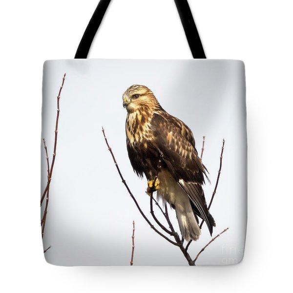 Juvenile Rough-legged Hawk  Tote Bag by Ricky L Jones