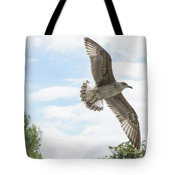 Tote Bag featuring the photograph Juvenile Seagull In Flight by Jacek Wojnarowski