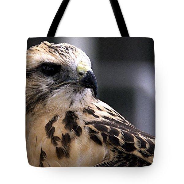 Juvenile Swainson's Hawk Tote Bag
