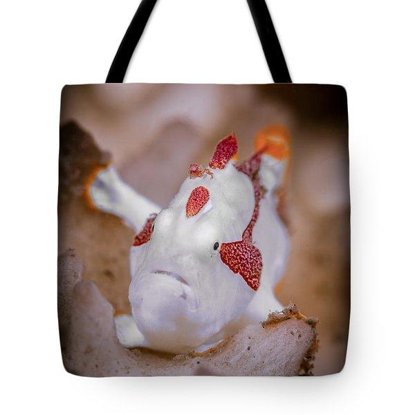 Juvenile Warty Frogfish Tote Bag