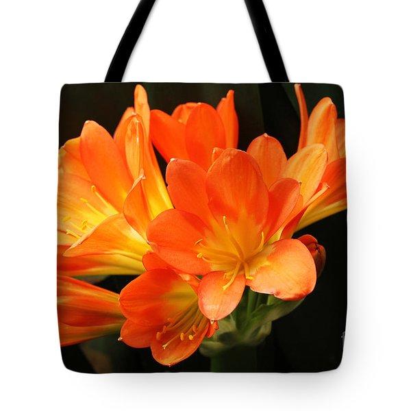 Kaffir Lily #2 Tote Bag