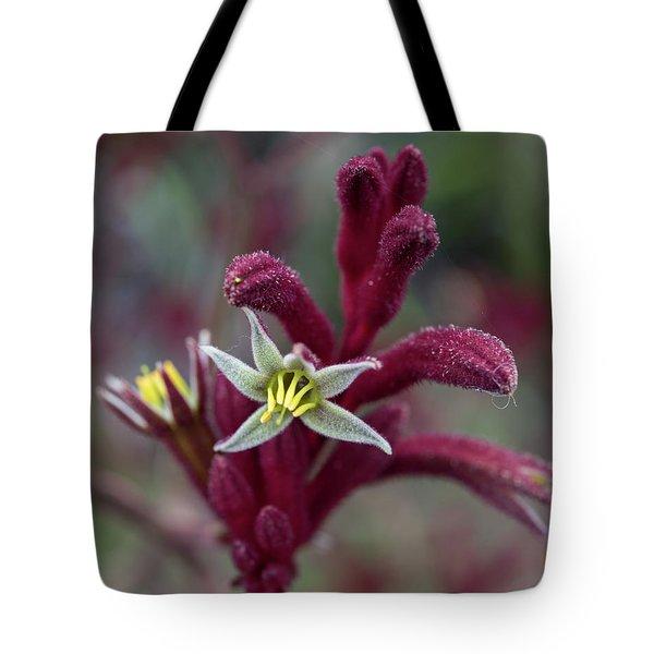Kangaroo Paw Tote Bag