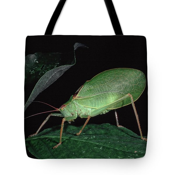 Katydid At Night Tote Bag